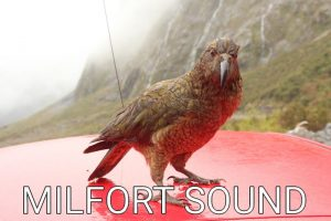 New Zealand: Birds of the Milford Sound