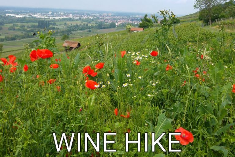 Germany: Nice Wine Hike at the Bergstraße