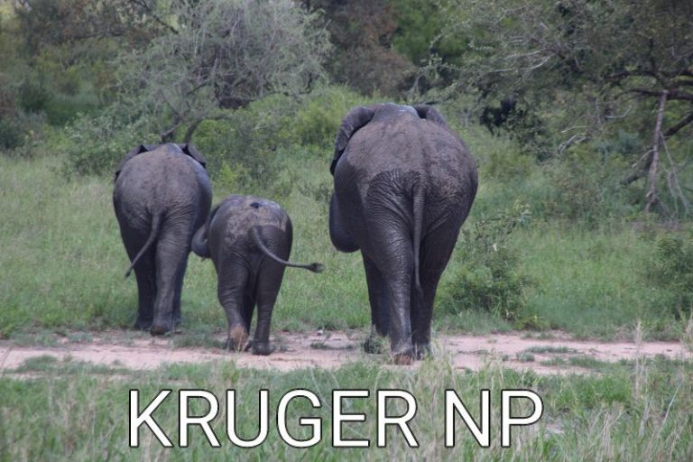 South Africa: Animals of the Kruger National Park