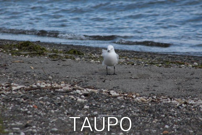 New Zealand: From the rain in the eaves – Taupo