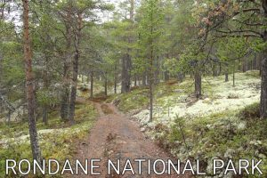 Norway: A rainy start in the Rondane National Park