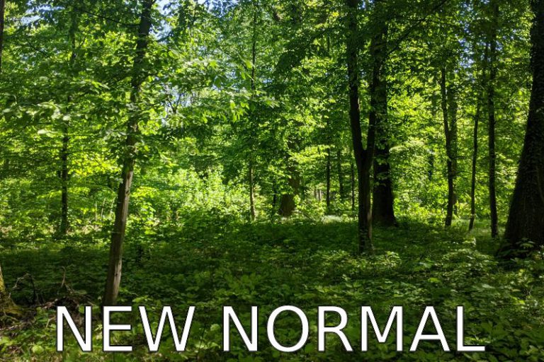 Germany: Our new normal? (Covid-19 Blog)