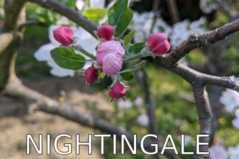 Germany: Songs of a nightingale