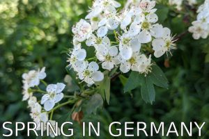Germany: Springtime and back to normal? (Covid-19 Blog)