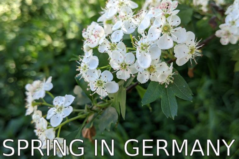 Germany: Springtime and back to normal?