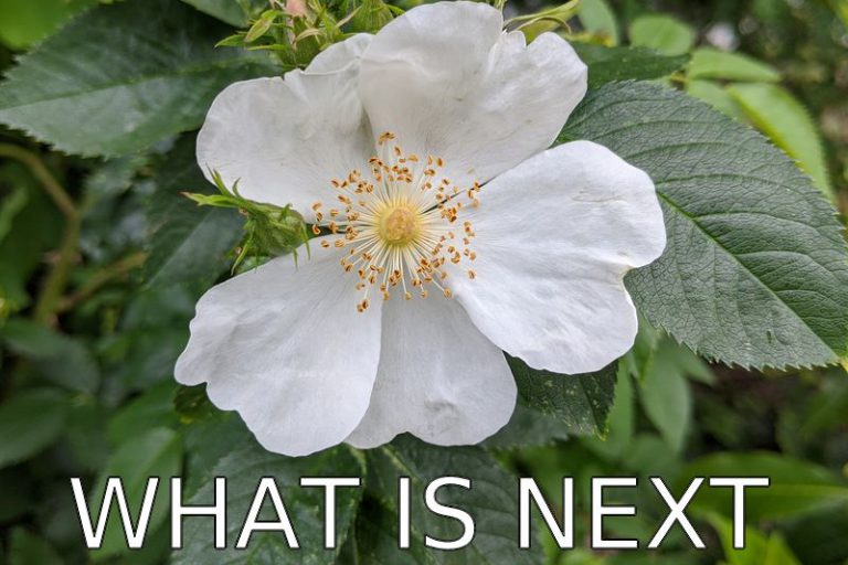 Germany: What is next? (Covid-19 Blog)