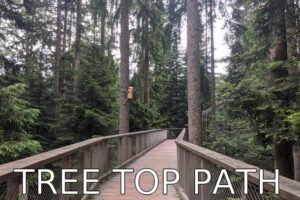 Germany: Tree Top Path in the Black Forest
